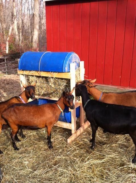 17 Best images about Goat Housing Idea on Pinterest ...