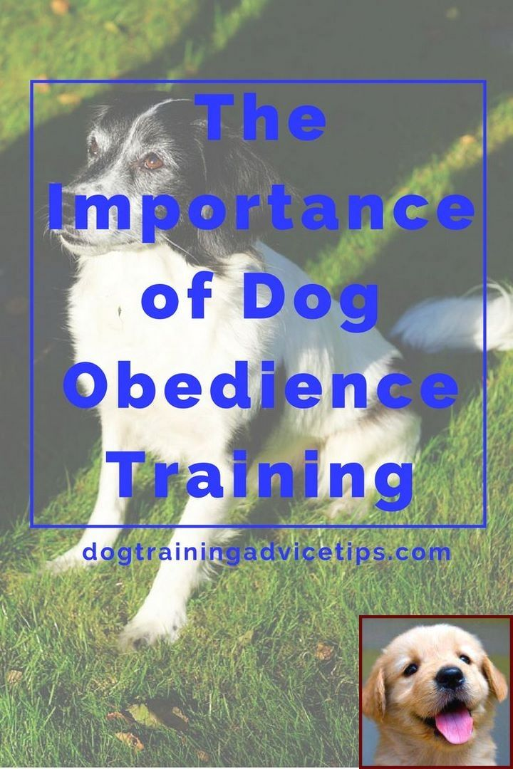 House Training A Puppy 6 Months Old And Dog Training Classes