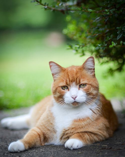 ...a face like no other...(via 500px / Photo sunny my Tabby cat by Neema Doma)