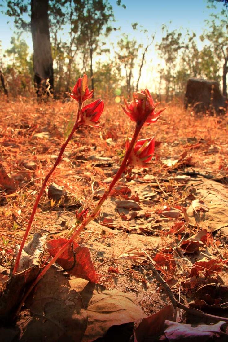 Kakadu, Darwin NT, Australia