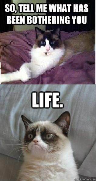 Grumpy Cat - So tell me, what has been bothering you...                                                                                                                                                     More