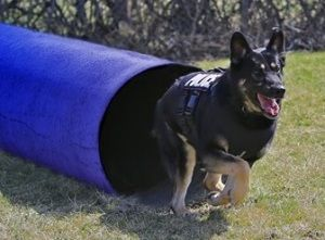 OAKLAND COUNTY, MI – The Oakland County Sheriff's Office Canine Unit is pleased to announce it will be receiving another ballistic vest for OCSO's K9 EIKO thanks to a nationwide GROUPON EVENT that has raised over $335,000.00.