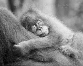 SCHATTIGE BABY orang-OETAN foto zwart-wit afdrukken Baby