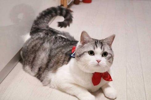 猫 セーラー服 首輪