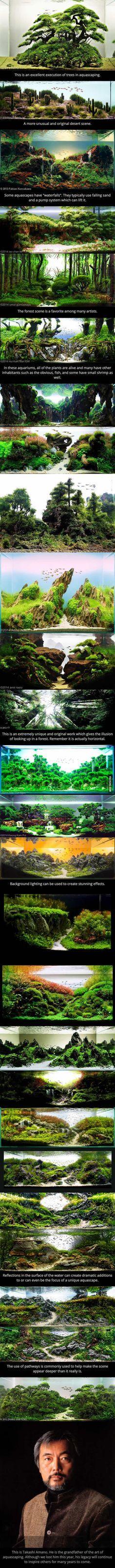 Esto es simplemente increíble. . . Estos son los acuarios. Este es el arte de un paisajismo acuático.