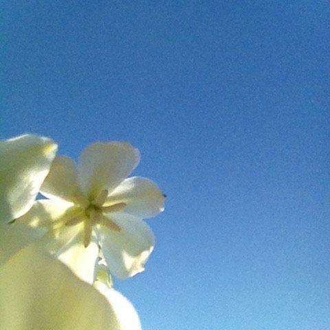 #mindfulness#achtsamkeit#summer#sommer#gardening#garten#natur#nature#naturelovers#landliebe#landlust#bauerngarten#gartenglück#gartenliebe#wachstum##growth#flowers#blumen#floral#structure#sky#himmel#blüte#blossom#sky#himmel#jucca#palmlilie