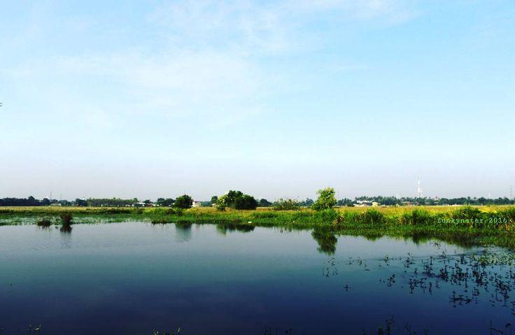 Di sebuah kolam sawah kumemandang resahnya insani... #pemandangan #alam #sawah #photographers #photooftheday #photo #photoofday #photoshoot #photographi #landscapes #landscapelover #landscape_captures #photolandscape #fotosawah #fotografi #landscape #canon #canon600d #lensafix #lensafix50mm #pemandangansawah #kolamsawah #photographylandscape #hunting by zulfikaridris