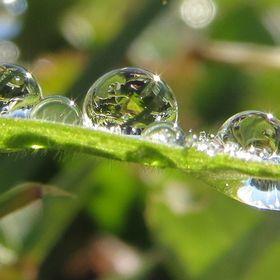 """""""WaterDropsPhotoContest"""" by sammysorensen"""