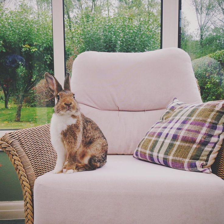 She's a sassy one  #bunniesofinstagram