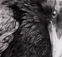 The Raven by drSIDDHI