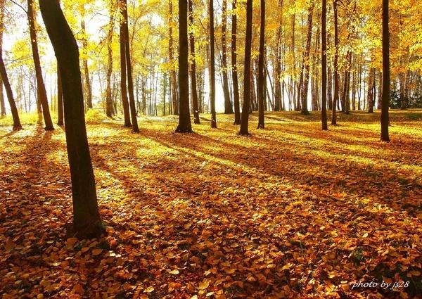 Polska złota jesień... w parku
