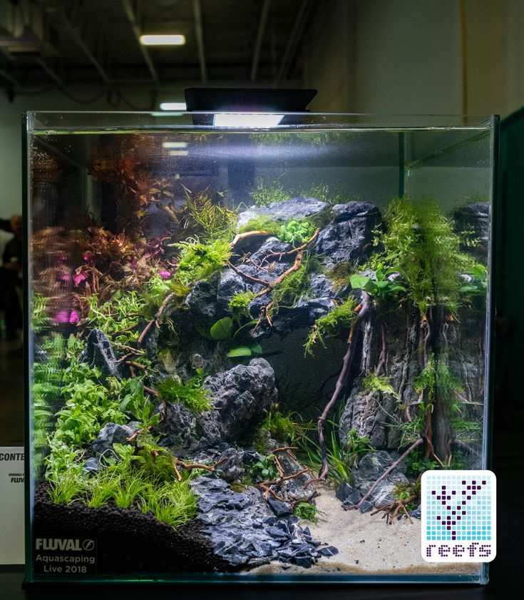 2018 Aquatic Experience Coverage Part II: Aquascaping ...