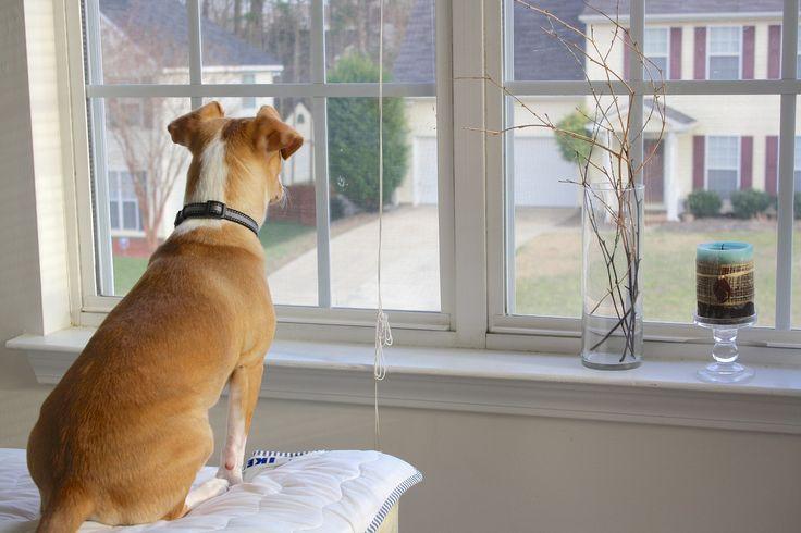 Kutya az ablak előtt ülve várja a gazdit  #kutya #idő #dog #time #kutyabaráthelyek #kutyabarathelyek