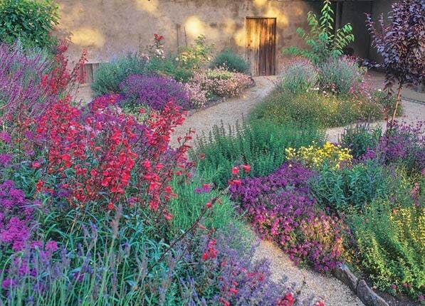Best 25 California garden ideas on Pinterest Drought tolerant