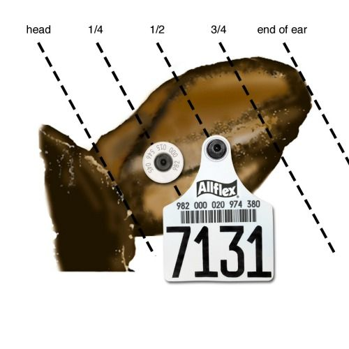 Explanation of cattle tags