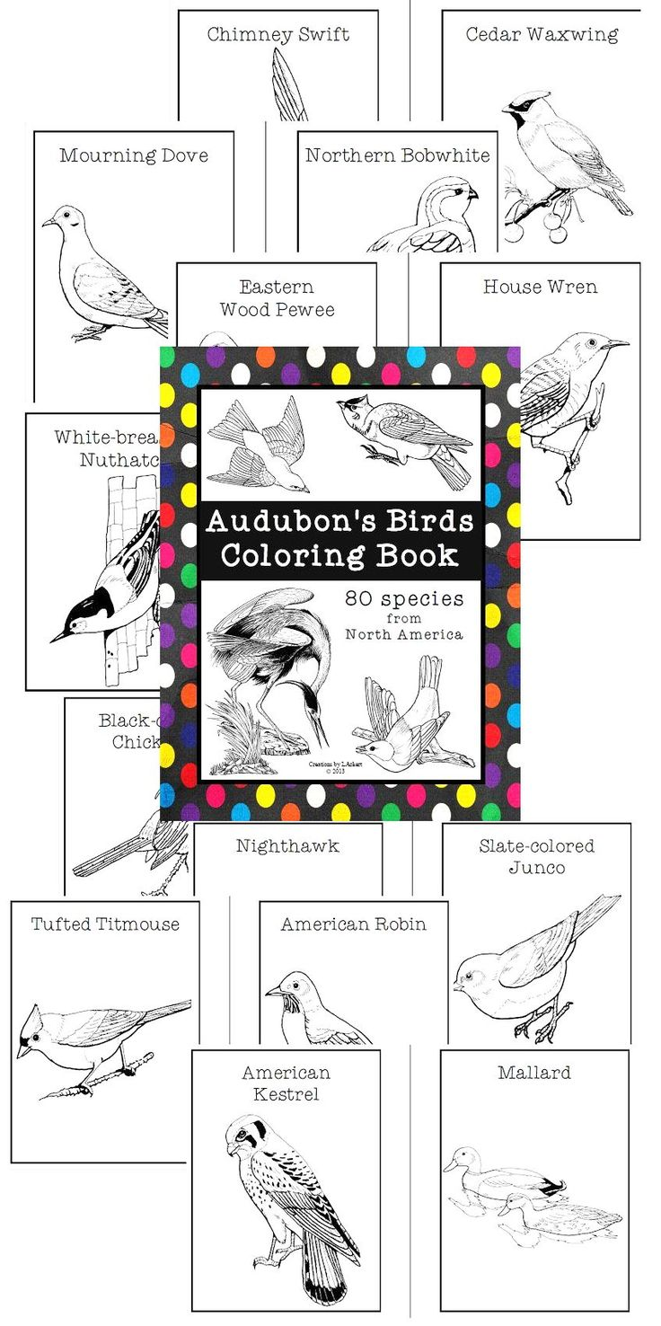 The zoology coloring book - Bird Coloring Book