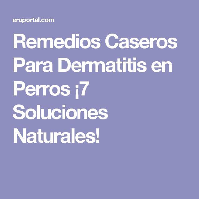 Remedios Caseros Para Dermatitis en Perros ¡7 Soluciones Naturales!