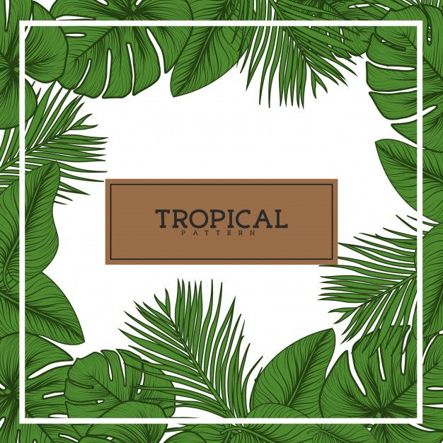 Tropical Leaves Background Premium Vector