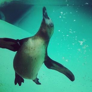 J'adore Penguins