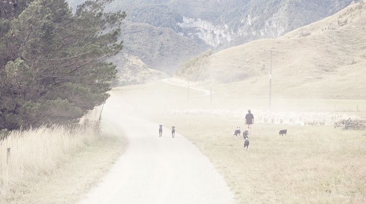 Mt Owen, Dogs, Round up, Dust up, NZ Art, Our Land, Dan Max.