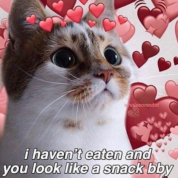 Pin By Saka On Reaction Images Cute Cat Memes Cute Love Memes Cute Memes