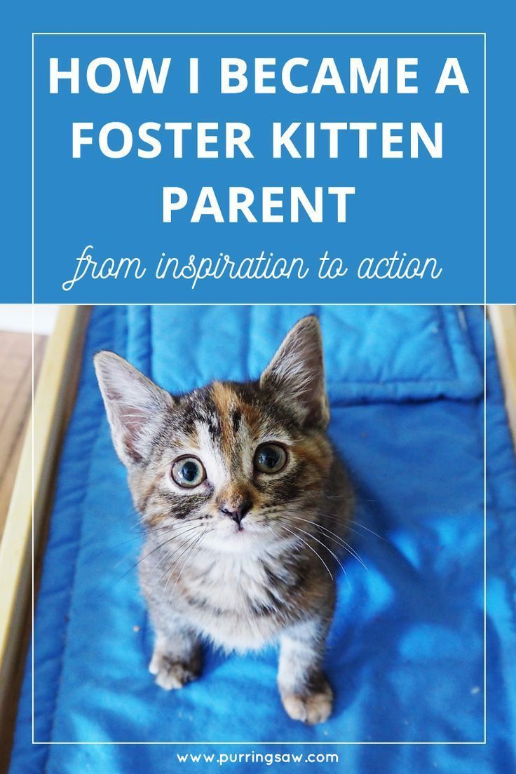 Here S How I Became A Kitten Fostering Parent I Begin A Blog Series On My Experience Being A Foster Kitten Parent With The Foster Kittens Cat Care Cat Advice