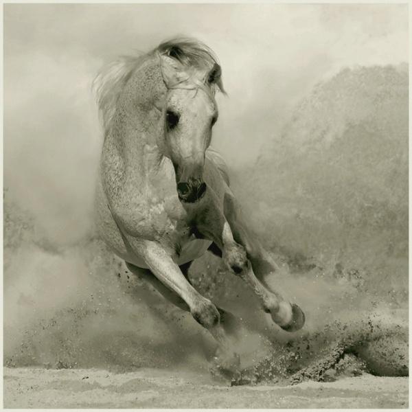 Arabian horses: Beautiful Horses, Photos, Animals, Art, Wojtek Kwiatkowski, Photography, Arabian Horses