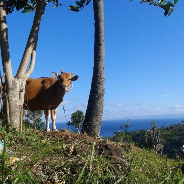 Ocean View Bali, Indonesia