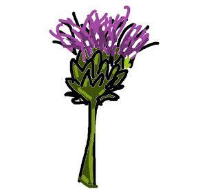 Thistle (plant that cure)