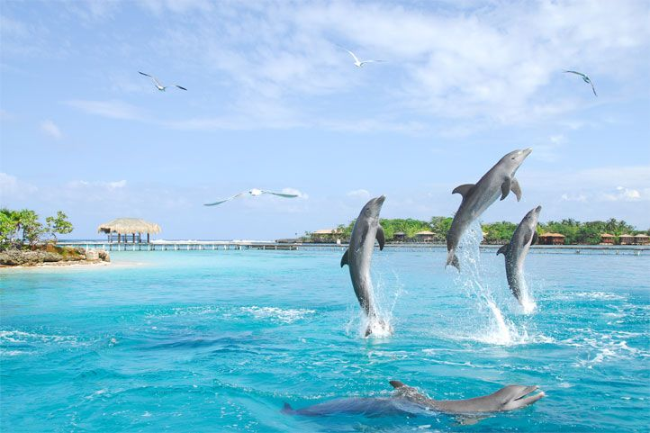 Anthony's Key Resort on Roatan Island, Honduras.  You can swim with the dolphins there.