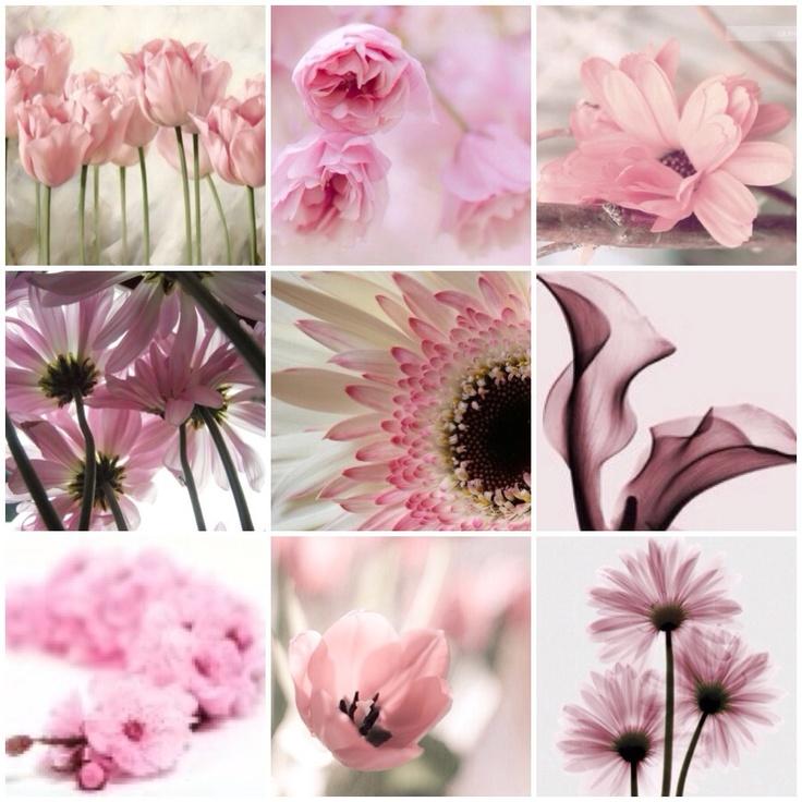 My Creation: Pink Flower Collage