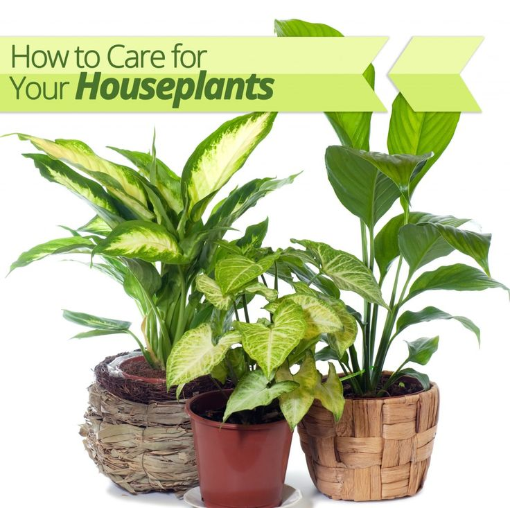 Providing Tree And Plant Care: How To Care For Houseplants