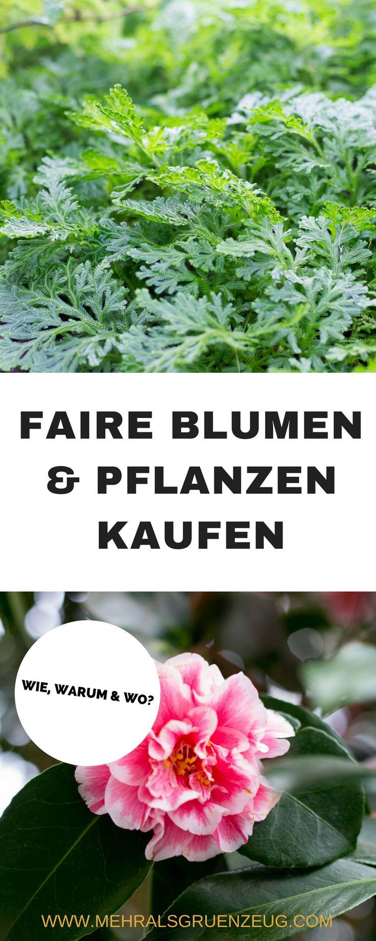 Wie kann ich eigentlich faire Blumen und Pflanzen kaufen? Welche Siegel gibt es - und warum ist es eigentlich so wichtig, fair gehandeltes Grün zu kaufen?