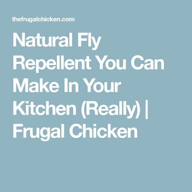 Natural Fly Repellent You Can Make In Your Kitchen (Really)   Frugal Chicken