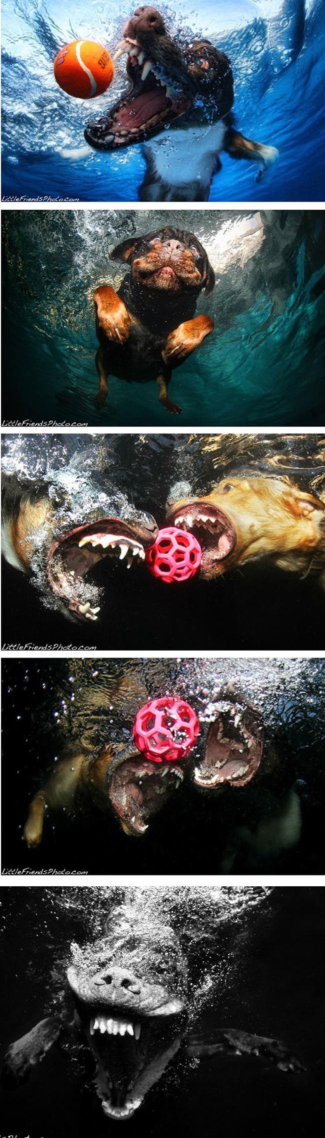 underwater doggies part 2