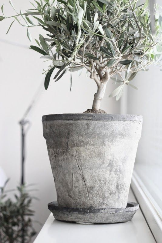 .Nice, white grey plant pot.