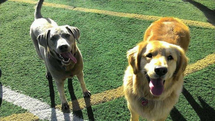 #DogsOfTwitter #DogLovers #DogCare