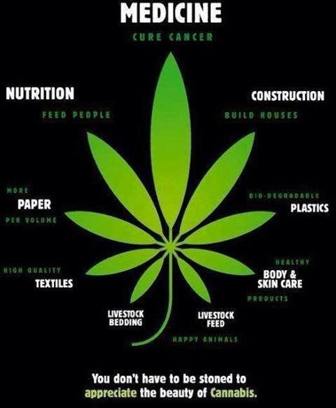 The Benefits of Cannabis.