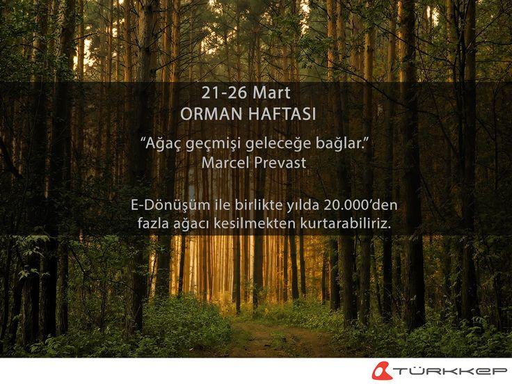 E-Dönüşüm ile birlikte yılda 20.000'den fazla ağacı kesilmekten kurtarabiliriz.  #OrmanHaftası #Green #EDönüşüm #AğaçGelecektir