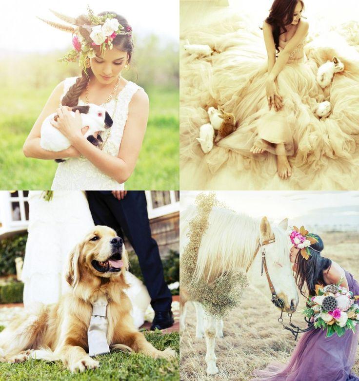 Afla in cadrul articolului Wedding Box cum se poate transforma animalul tau intr-un vertitabil domnisor de onoare, gata sa acapareze toate privirile.