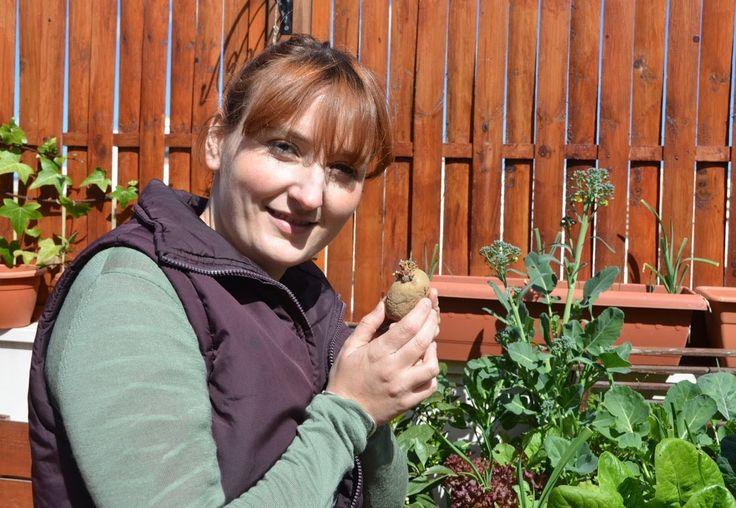 El huerto en casa 21 patatas huerto casero pinterest - El huerto en casa ...
