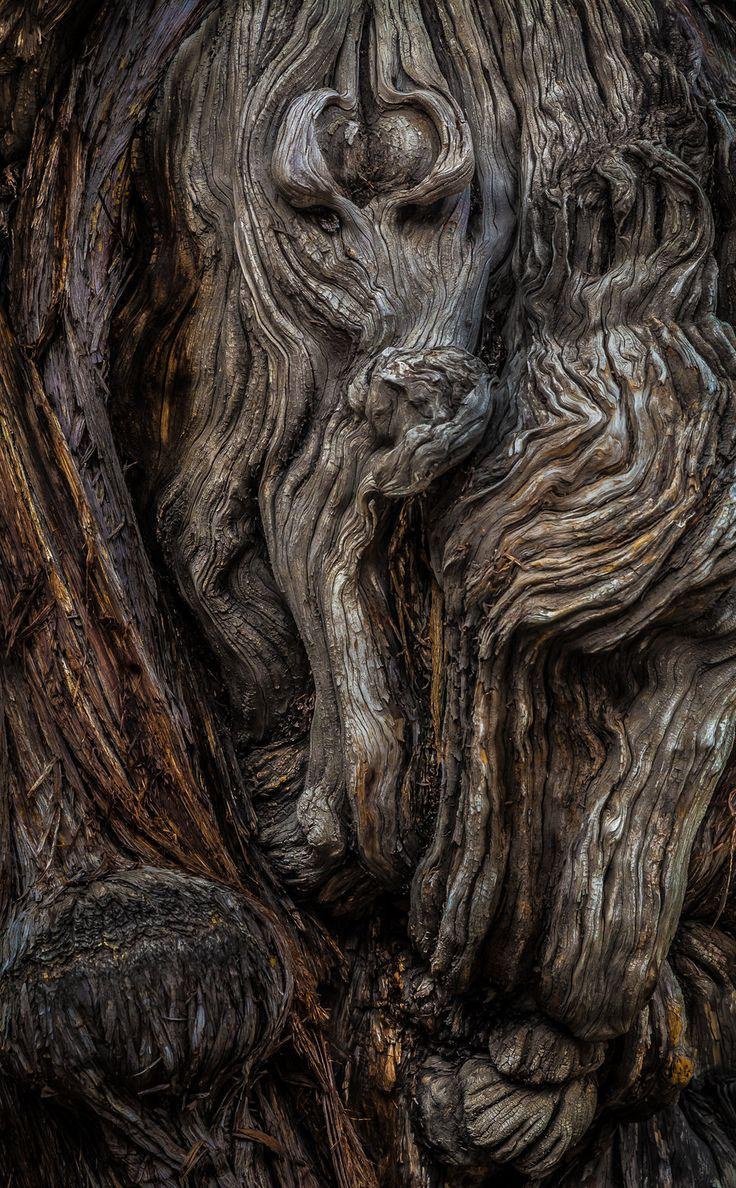 tree bark macro | by WTek79