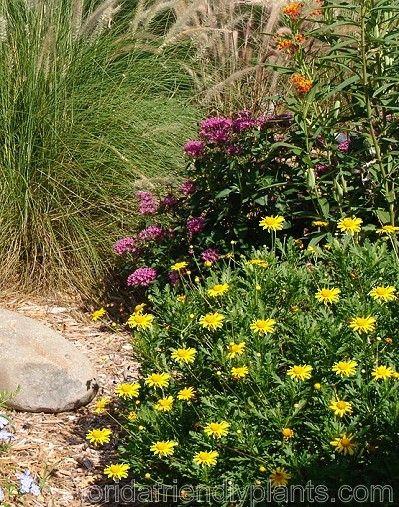 44 best Florida Gardening images on Pinterest | Florida gardening ...