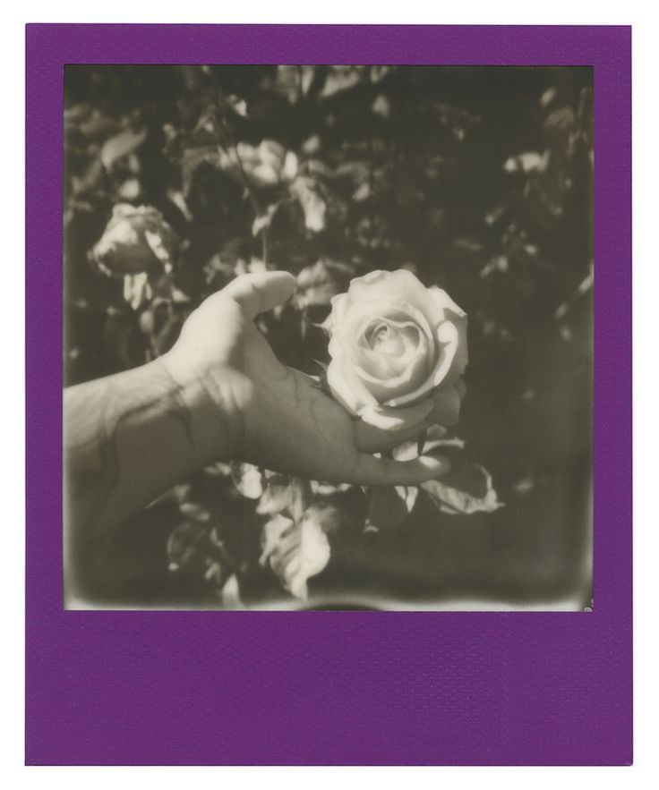 Polaroid 600 film: Black and white roses