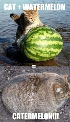 Fusion Of Cat And Watermelon - Funny Memes>This seems funnier to me than it probably should.