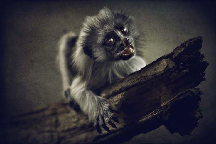 Os animais mais bonitos