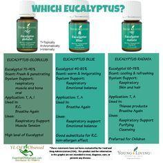 Young Living Essential Oils: Eucalyptus Globulus Eucalyptus Blue Eucalyptus Radiata