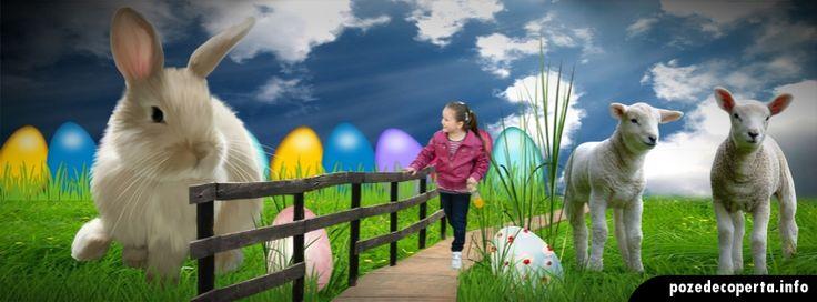 Fairy Easter Facebook Cover   Poze de coperta