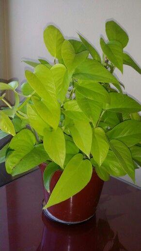 1000 images about plantas que deseo on pinterest - Plantas de sol directo ...