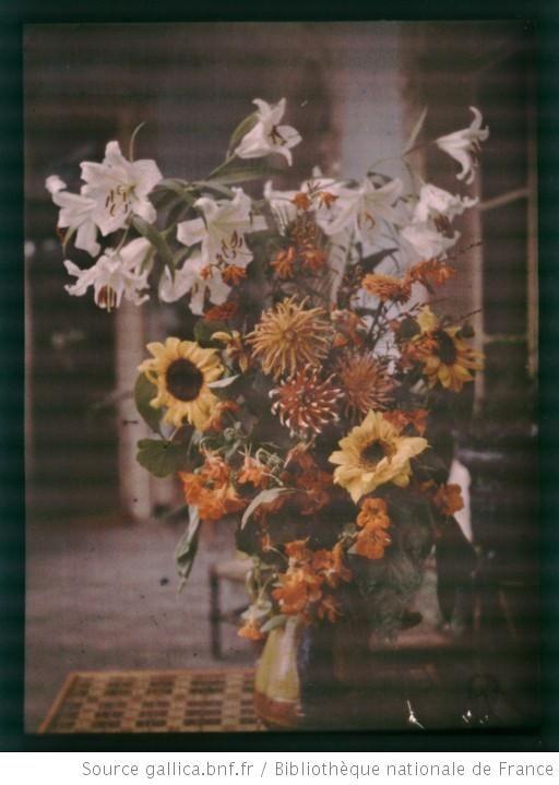 [Bouquet de lis, tournesols et dahlias] : 1920 Autochrome, plaque de verre claude Ropolo Gallicabnf